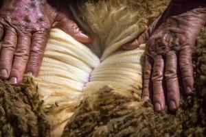 Australia NSW Condobolin Merino wool