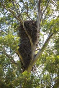 Australia Eagles Nest Image Shane Aurousseau