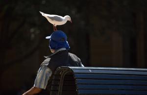 Australia Sydney NSW Birdman