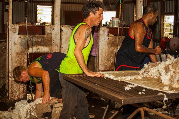 Shearing Condobolin NSW Australia