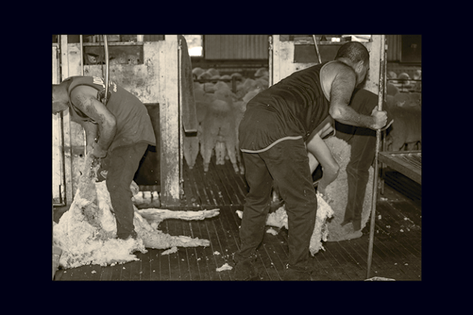 Cockys Drovers Shearers and Hard Yakka