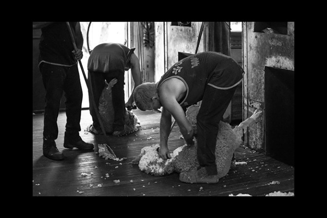A Shearer's Story photographs Shane Aurousseau