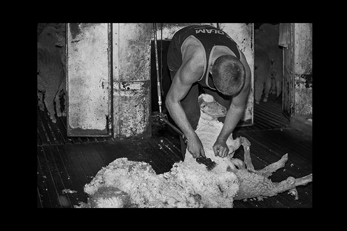 Shearing-hard-Yakka
